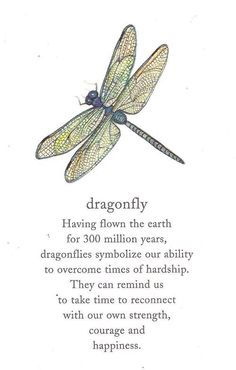 Dragonfly quote