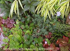 Several ideas for what to grow in full shade or dappled shady areas -- all edible! Tips on varieties and how shade growth will differ, as well. #gardeningtips #shadegardening #plantingtips