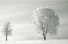 vinter528