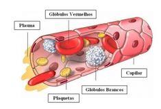 Tecido conjuntivo sanguíneo - Formado por diversos tipos de células, esse tecido possui as funções de defesa do organismo e transporte de nutrientes. Vale lembrar que o sangue é um tecido líquido, composto de hemácias, leucócitos, plaquetas e plasma.