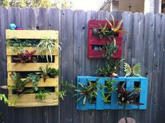Summer project done...vertical gardening with pallets!