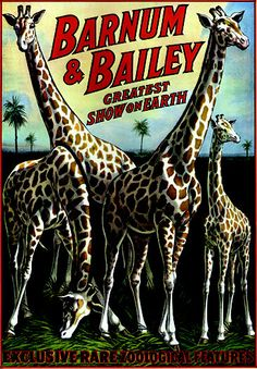 BARNUM & BAILEY: Exclusive Rare Zoological Features 1920's Platinum Vintage Giclee