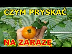 Plant Hanger, Vegetables, Flowers, Plants, Diy, Youtube, Lawn And Garden, Bricolage, Vegetable Recipes