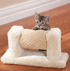 Roller Cat Toy - How cute is that!? Click the link to buy, or you handy sorts can DIY!