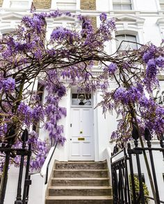 House with wisteria arch in Kensington, London