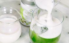 Matcha Tea for Green Tea lattes and Green Tea Smoothies