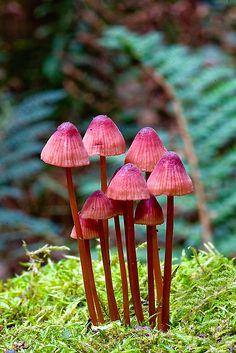 Fungi 1. von trevorb