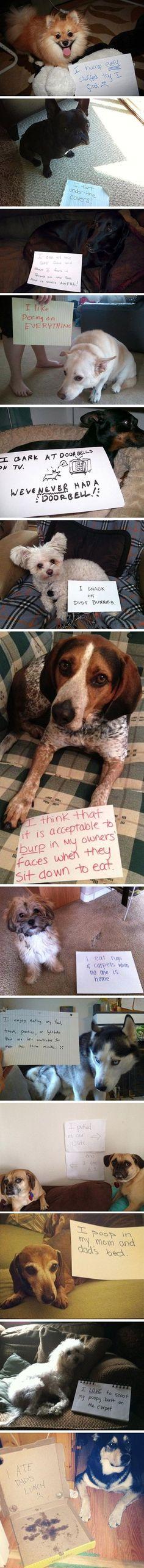 Shaming Dogs
