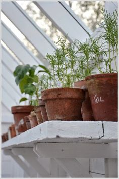 Summer gardening in the green house