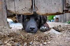 5 dicas de Ongs de Animais abandonados para ajudar cães - Blog Risü