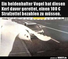Ik ben klaar met je Shenanigans: Animal Moms Carrying Your Kids Funny Facts, Funny Jokes, Hilarious, Really Funny, The Funny, Funny Images, Funny Pictures, Types Of Humor, Funny Scenes