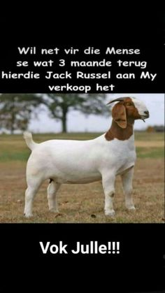 Afrikaans, Funny Sayings, Words Quotes, Jokes, Humor, Funny Proverbs, Husky Jokes, Humour, Memes