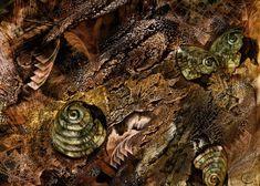 """""""Deconstructing Autumn"""" - Chris Cole"""