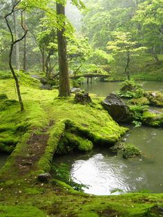 Moss Bridges, Ireland  photo via mehearties