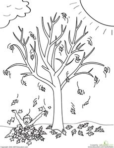 Maple Tree Coloring Page Worksheets, Kindergarten and Craft