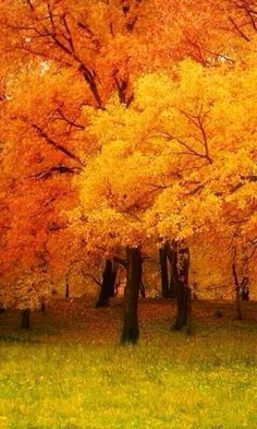 When the trees change color