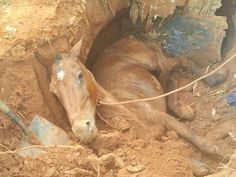 #News  Égua é resgatada após horas presa em fossa desativada em Uberlândia