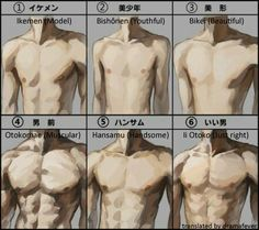 Most Attractive Male Body Type, Chinese Netizen Reactions - chinaSMACK Body Reference, Drawing Reference Poses, Anatomy Reference, Drawing Tips, Body Study, Anatomy Poses, Body Anatomy, Male Torso, Digital Painting Tutorials