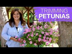 Here is an instructional video on keeping your Petunias lush and Flowering. They can be stunning plants with a little work :) Good luck! Petunia Care, Petunia Plant, Petunia Hanging Baskets, Hanging Flower Baskets, Hanging Plants, Pruning Plants, Garden Plants, Balcony Garden, Container Gardening