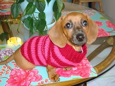 Holly would love this sweater! Holly Would, Animal Sweater, My Heart Hurts, Beautiful Creatures, Puppy Love, Hand Knitting, Puppy Sweaters, Knit Crochet, Butterfly
