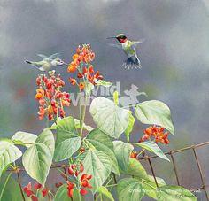 A085678941:Rubies & Scarlet Runner Beans; Original Watercolor Painting