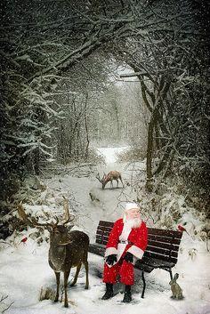 Christmas Scenes, Noel Christmas, Father Christmas, Country Christmas, Christmas Pictures, Winter Christmas, Vintage Christmas, Christmas Budget, Reindeer Christmas