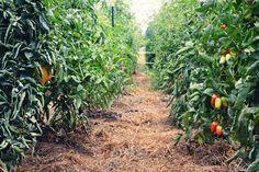 Prairie Fruits Farm - Champaign, IL
