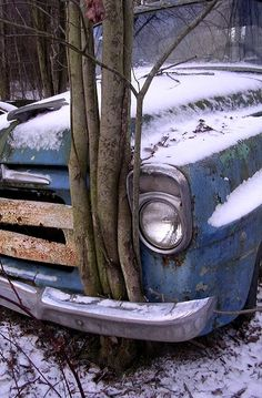Tree growing through old truck...