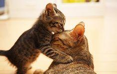 kitties kissing