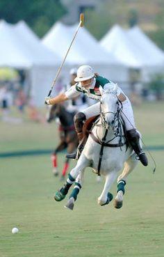 Polo ponies!  Serious athletes.