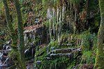 Icicles at Golitha Falls 0109