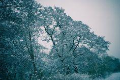 'Oblique Winter Tree' von Roland Hemmpel bei artflakes.com als Poster oder Kunstdruck $16.63