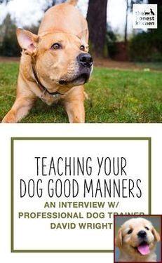 How To Train My Dog Like A Service Dog Tip 123683308 House