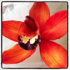 gum paste flower--Cymbidium Orchid