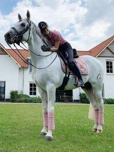 Cute Horses, Pretty Horses, Horse Love, Beautiful Horses, Dressage Saddle, Dressage Horses, Horse Tack, Draft Horses, Horse Stalls