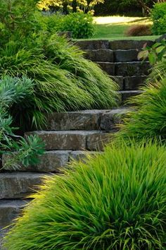 Stone steps like this would work very well with our rock.  Curved steps facing the sidewalk but right by the driveway with a arbor and gate.  Someday soon!  Stone steps bracketed by Hakonechloa macra