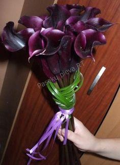 Black red (bordeaux) calla lilies.