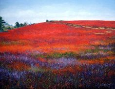 Blueberry Barrens Maine - Bing Images