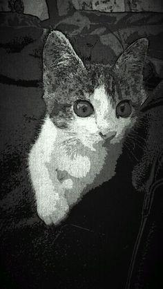 Cats 6