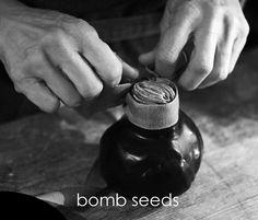 bomb seeds - semi di bomba • florist donaflor Seeds, Rings For Men, Jewelry, Men Rings, Jewlery, Jewerly, Schmuck, Jewels, Jewelery