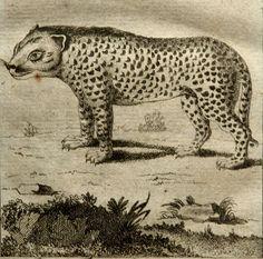 1788 Antique print of a CHEETAH. Cheetahs. by AntiquePrintsOnly, $19.50