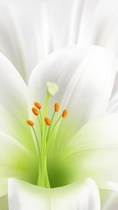 Easter Lily wallpaper by Sims4Fan - ba - Free on ZEDGE™