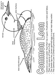 Common Loon coloring page Canadian Symbols, Canadian History, Colouring Pages, Printable Coloring Pages, Canada Day Crafts, Canadian Animals, Money Activities, Wood Carving Patterns, Bird Crafts