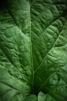 Leaf - Prints available - https://society6.com/jbbth #artlovers #fineart #nature #photographers #photography