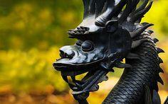El dragón asiático está compuesto por nueve entidades. La cabeza de camello, los ojos de un demonio, los oídos de una vaca, los cuernos de un ciervo, el cuello de una serpiente, el vientre de almeja, sus garras de águila, las plantas de sus pies de tigre y las 117 escamas que cubren su cuerpo son de una carpa: 81 (9×9) masculinas y 36 (9×4) femeninas.