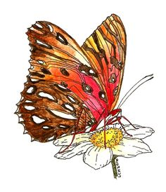 Tipsy Scribbles: Passion Butterfly Sketch Watercolor