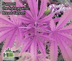 Amen to that! For all of the ladies in our lives ❤️ #hash_brothers #games #breastcancerawareness #marijuana #colorado #alaska #oregon #washington #dc #weedlife #curecancer #stoner #dabs