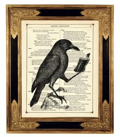Raven Crow reading a book Animal Natural by curiousprintery, $9.90