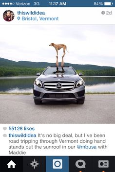 #Acroyoga in the car with a doggie! Love this! Photo credit #thiswildidea