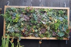 Vertical gardening with succulents